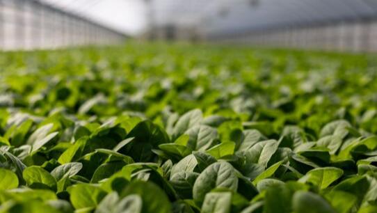 Razón y proporción de los factores que limitan la productividad agrícola
